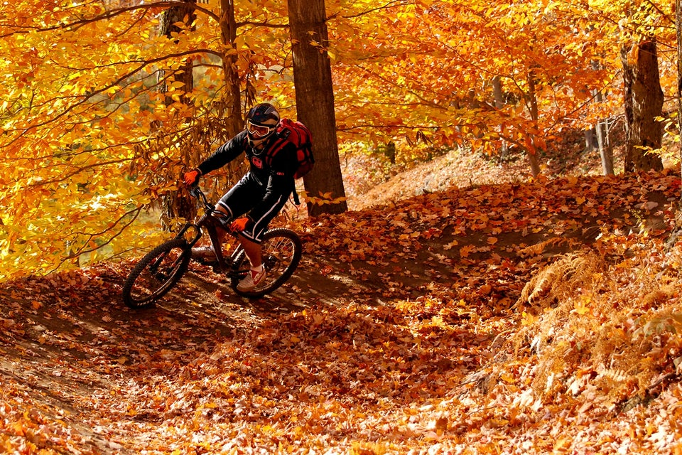Mountainbike i skogen