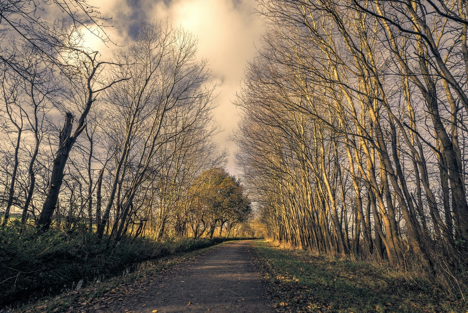 Efterår, skov, gåtur, motion