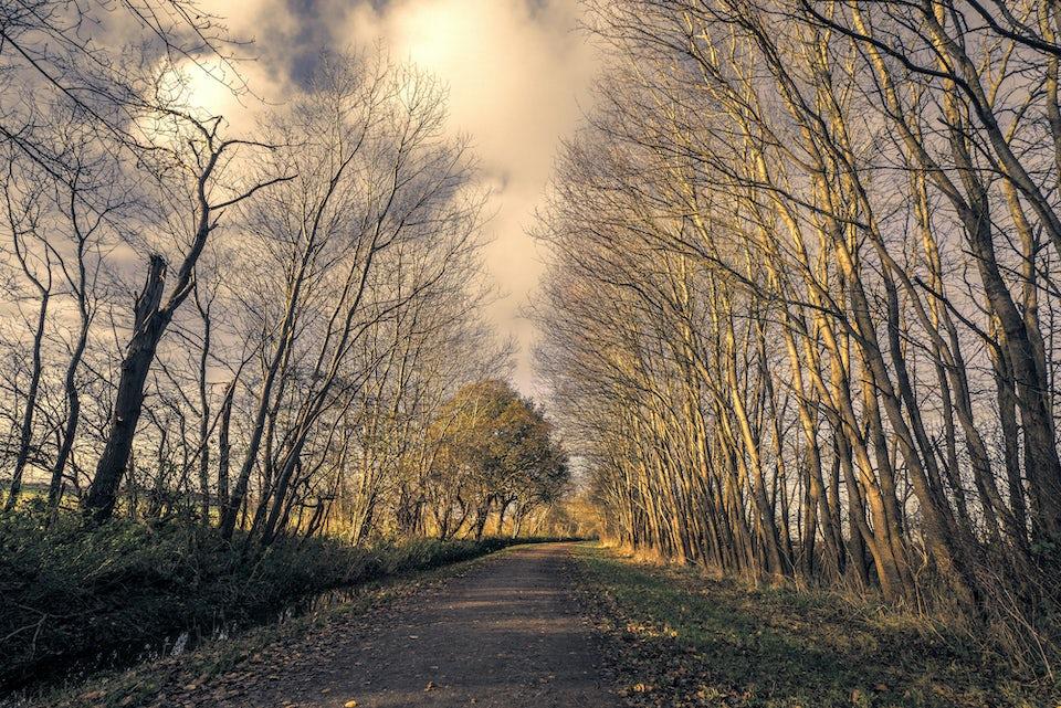 Kevät, puut, kävely, luonto