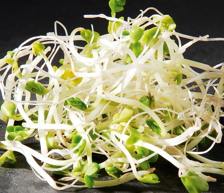 broccolispirer