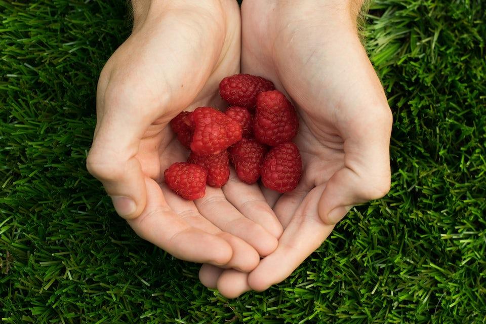 Hænder holder hindbær
